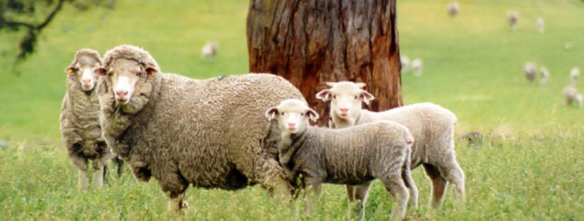 lana-merinos-piacenza-cashmere